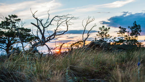 Dry Landscape With Dead Tree stock footage