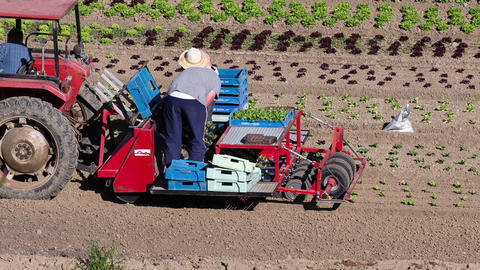 Tractor Pulling A Planting Machine stock footage