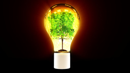 Tree growing inside colorful bulb Stock Video Footage