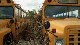 Schoolbus pan Footage