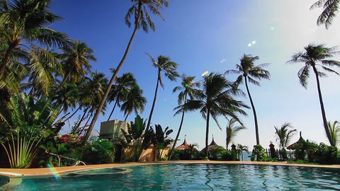 Swimming pool and palms loop Stock Video Footage
