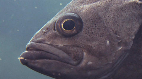 Fish Swimming Close Up Stock Video Footage