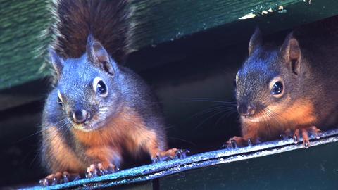 Squirrels Footage