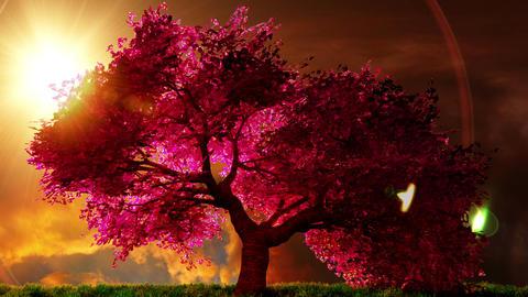 Cherry Blossoms Tree v1 03 Animation
