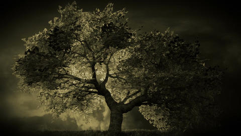 Cherry Blossoms Tree v1 05 Animation
