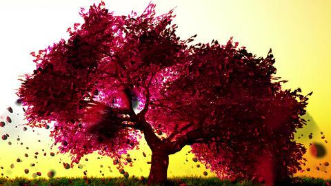 Sakura Cherry Blossom Petals