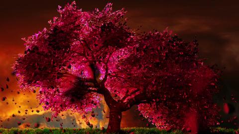Cherry Blossoms Tree v1 07 falling petals Animation