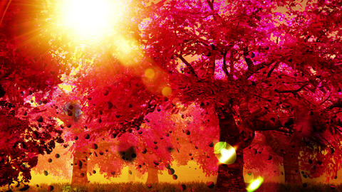 Cherry Blossoms Trees v02 05 falling petals Stock Video Footage
