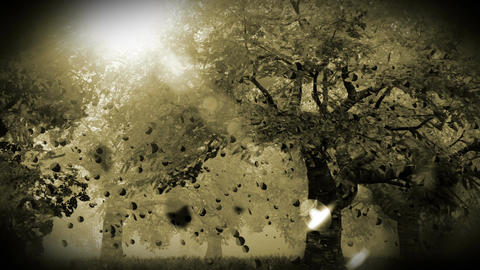 Cherry Blossoms Trees v2 06 falling petals Stock Video Footage