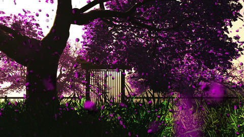 Cherry Blossoms Trees v3 04 falling petals Stock Video Footage