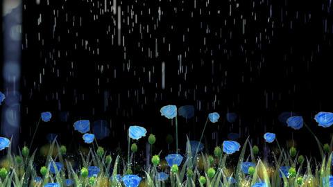 Rain2576 Animation