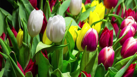 Bouquet Of Bright Tulips Blooms stock footage