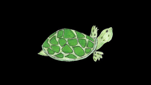 2D cartoon tortoise walking loop Animation