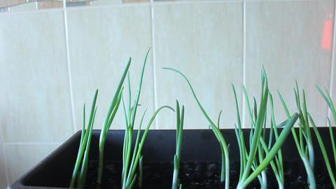 Green onion in pot Footage