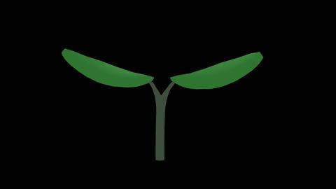 bud,germination2 Animation