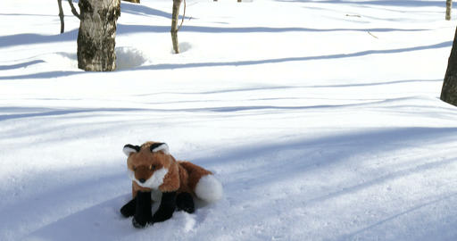 Stuffed fox on snow on a trail Footage