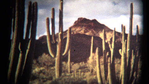 (1960's 8mm Vintage) Organ Pipe Cactus National Monument Footage