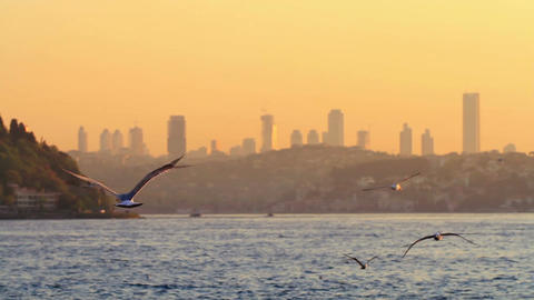 Flock of bird flying against city skyline during sunset Footage