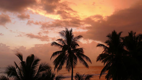 landscape with tropical sea sunset and palm Footage