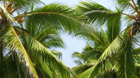 heart shape from the leaves of coconut palms Footage