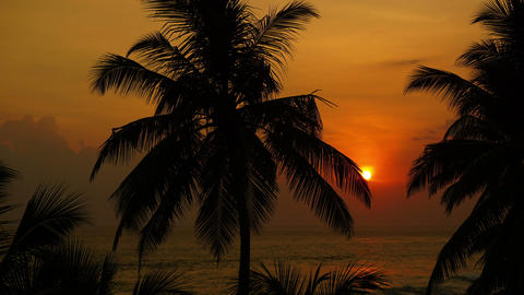 tropical sea sunset and palm - timelapse Footage