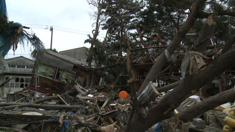Japan Tsunami Aftermath - Debris Litters Tree In Ishinomaki City Footage