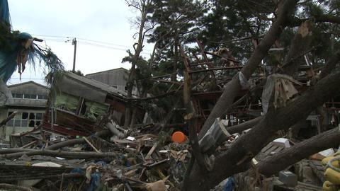 Japan Tsunami Aftermath - Debris Litters Tree In Ishinomaki City Footage