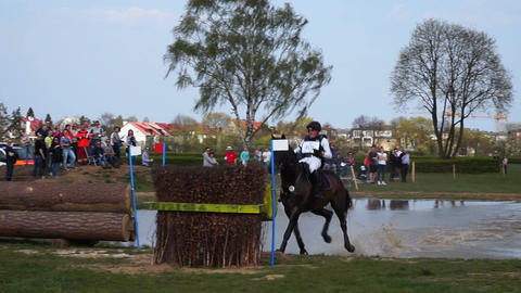 Jumping horse. Sport