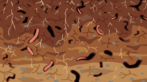 Earthworms in soil loop Animation