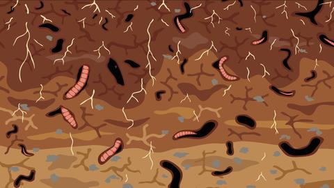 Earthworms in soil loop Animation