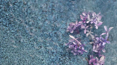 Water Falling On Hydrangea Flowers stock footage