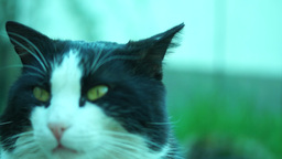 Cat With Green Backround Footage