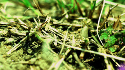 Many Ants Traffic On The Ground stock footage
