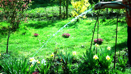 Woman With Hose Waters Flowers In Garden Footage