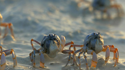 Crabs On The Beach in Sunrise Light, Bohol, Philippines 画像