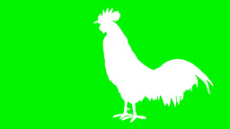 white shaped rooster singing Animation
