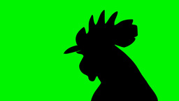 Head Of Black Shaped Rooster Singing stock footage