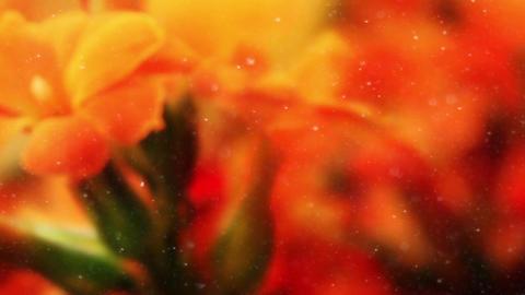 Flower 26 Footage