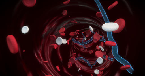 4K Red- white blood cells and virus Animation