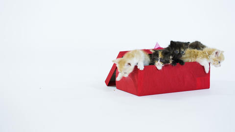 Red Kitty In A Gift Box stock footage