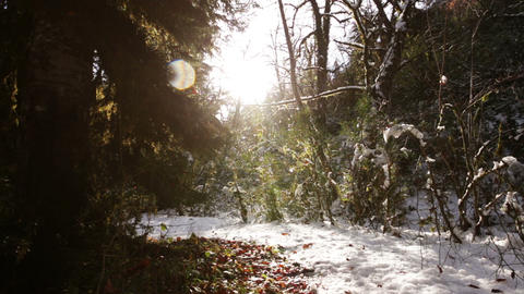 Sunny Forest stock footage