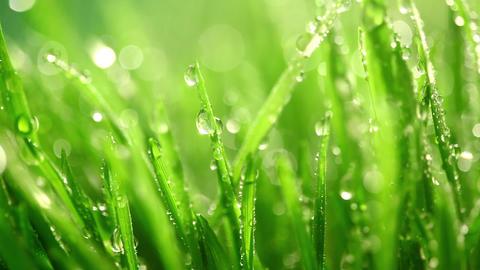 Grass under the rain Footage