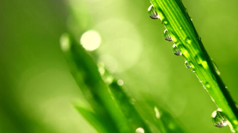 Grass Under The Rain stock footage