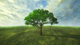 Tree Grass 0