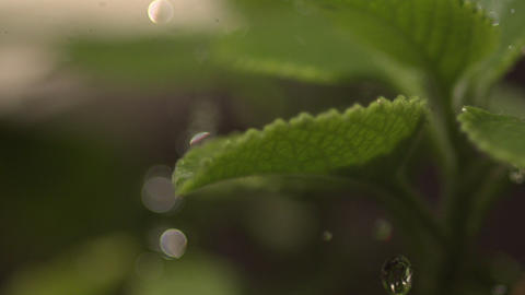 EC Uwaterdropplants stock footage