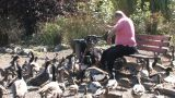 Senior Feeding Ducks Footage