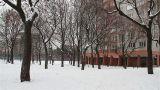 Snowy Suburb 01 Footage