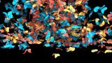 Butterfly Fall stock footage