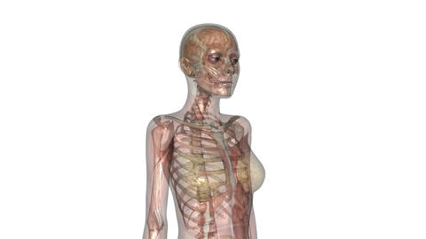 Human body Skeleton Stock Video Footage