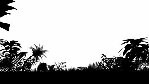 Growing tropical forest Animation